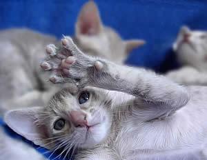 купить кошку, цена котенка