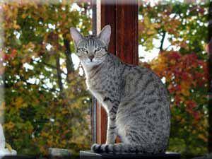 http://cat.mau.ru/abc/kan1.jpg