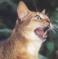 http://cat.mau.ru/aby/ab1.jpg