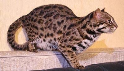 http://cat.mau.ru/ben/05.jpg