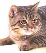 http://cat.mau.ru/bri/main1.jpg