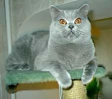 http://cat.mau.ru/bri/main3.jpg