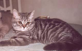 http://cat.mau.ru/bri/main5.jpg