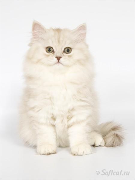 http://cat.mau.ru/brl/brl01.jpg
