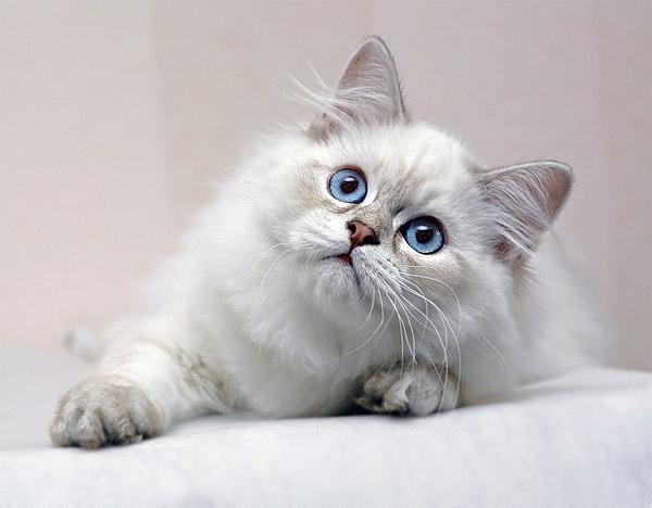 http://cat.mau.ru/brl/brl05.jpg