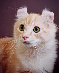 http://cat.mau.ru/cur/main-3.jpg