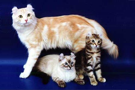 http://cat.mau.ru/cur/main.jpg