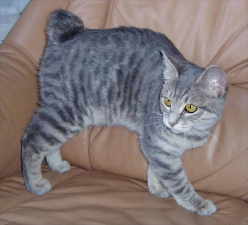 http://cat.mau.ru/kbt/bob20.jpg