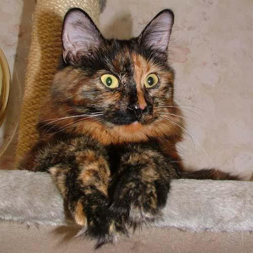 Ответить. у меня вот такая кошка.  Ветвь дискуссии.