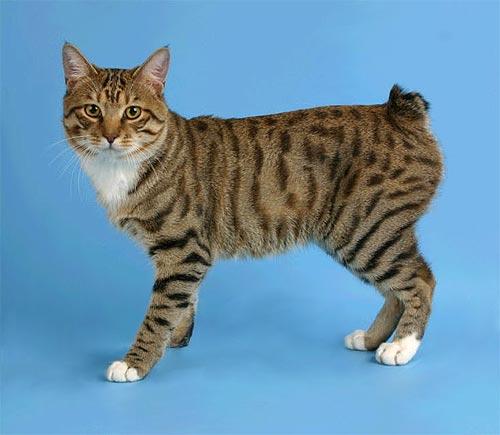 http://cat.mau.ru/kbt/bob40.jpg