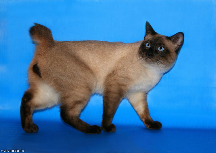 http://cat.mau.ru/mbt/mbt09.jpg