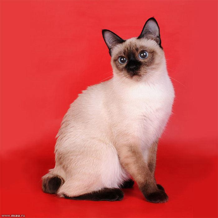 http://cat.mau.ru/mbt/mbt10.jpg