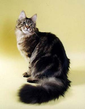 http://cat.mau.ru/mco/co01.jpg