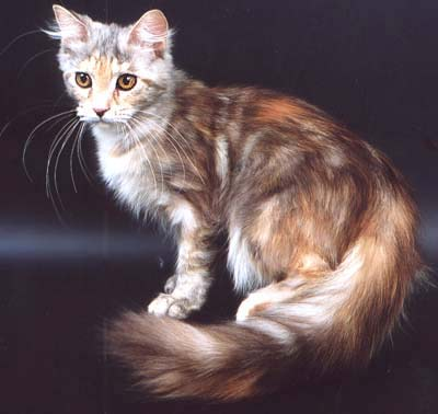 http://cat.mau.ru/mco/co16.jpg