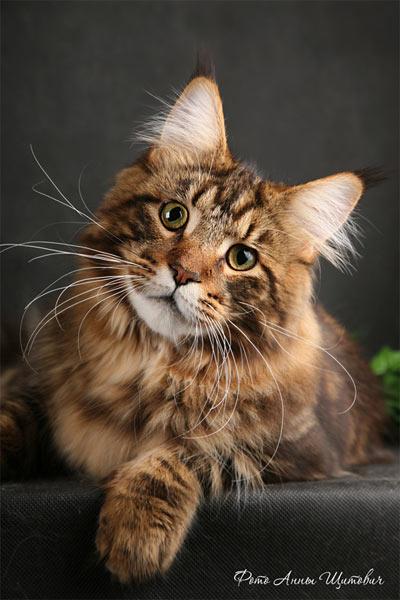 http://cat.mau.ru/mco/co30.jpg