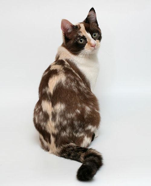http://cat.mau.ru/mun/m09.jpg