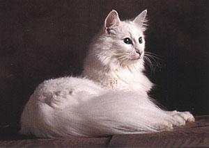 Норвежская лесная кошка история