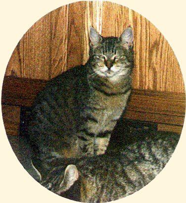 Фотография самой первой кошки Пикси