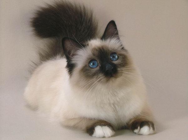 я люблю кошек любых например.