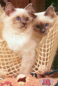 http://cat.mau.ru/sbi/main2.jpg