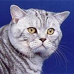 http://cat.mau.ru/sfs/main1.jpg