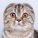 Re: Вислоухий котенок.