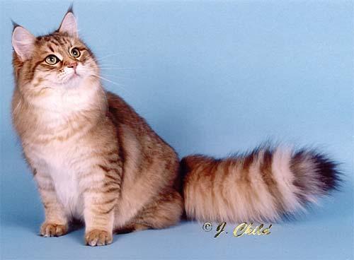 http://cat.mau.ru/sib/color04.jpg