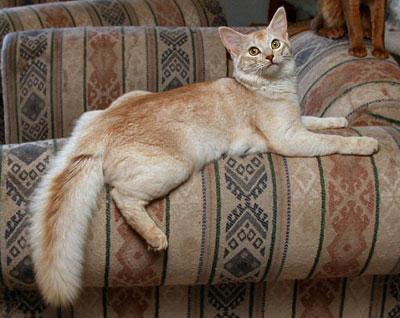 окрасы кошек фото - фотография 3.