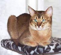 http://cat.mau.ru/aby/ab2.jpg