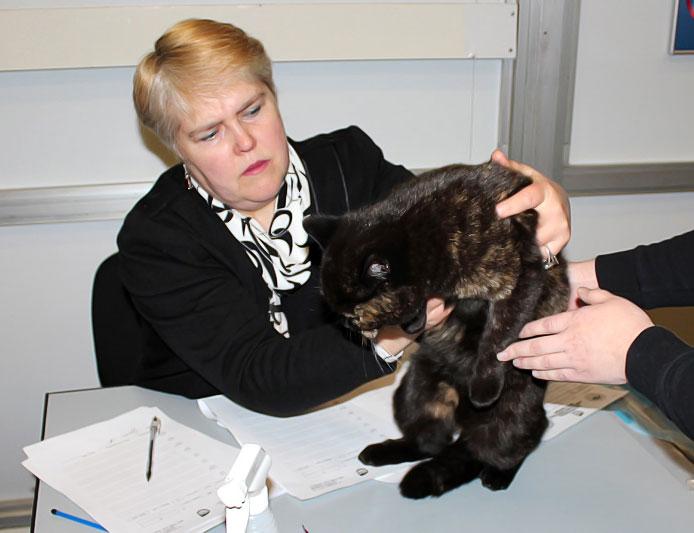 Клуб кошек фауна москва гулянская тамара адреса покер клубов в москве