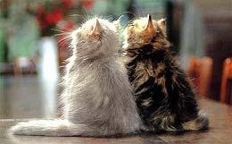 http://cat.mau.ru/per/main3.jpg